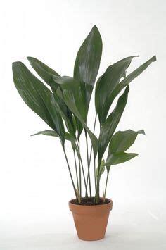 pflanzen gegen staub feng shui pflanzen f 252 r harmonie und positive energie im