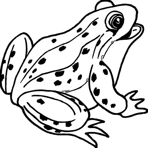 happy frog coloring page amphibian happy frog coloring page wecoloringpage
