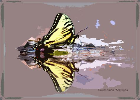reflections on water butterfly photograph by travis truelove