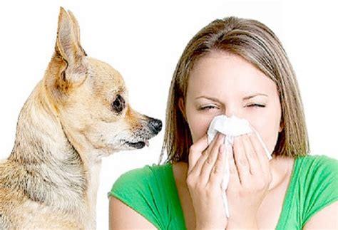 dander allergy defeating dander how to handle pet allergies