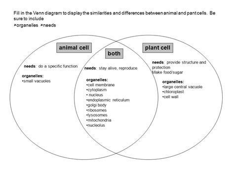 venn diagram animal and plant cells animal cell plant cell both ppt