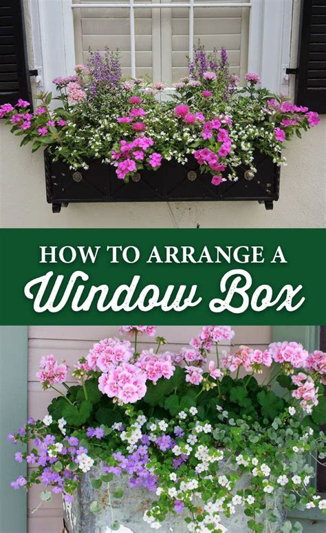 how to arrange indoor plants 25 best ideas about window box flowers on pinterest