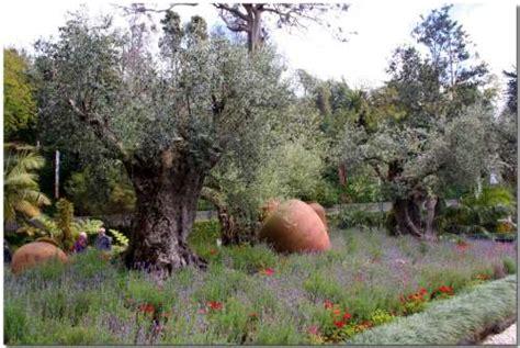 giardini con ulivi fiori attorno agli ulivi un quadrato di giardino