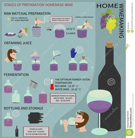 home winemaking wine from grapes infographics stock
