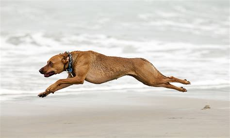 running dogs flying dogs a gallery on flickr