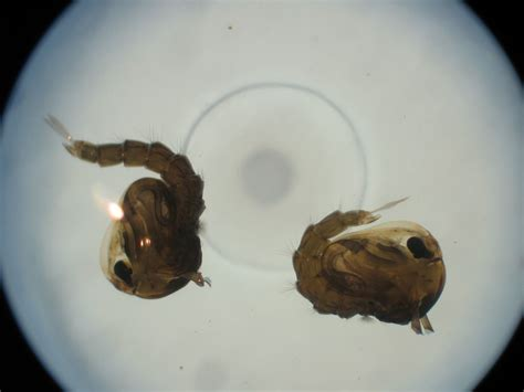 does cold kill bed bugs can bed bugs live in the cold 28 images can bed bugs