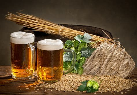 Wallpapers Hops Beer Grain Mug Food Drinks 5000x3502