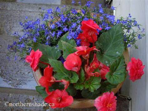 17 best images about hanging baskets shade planters on pinterest gardens project ideas and