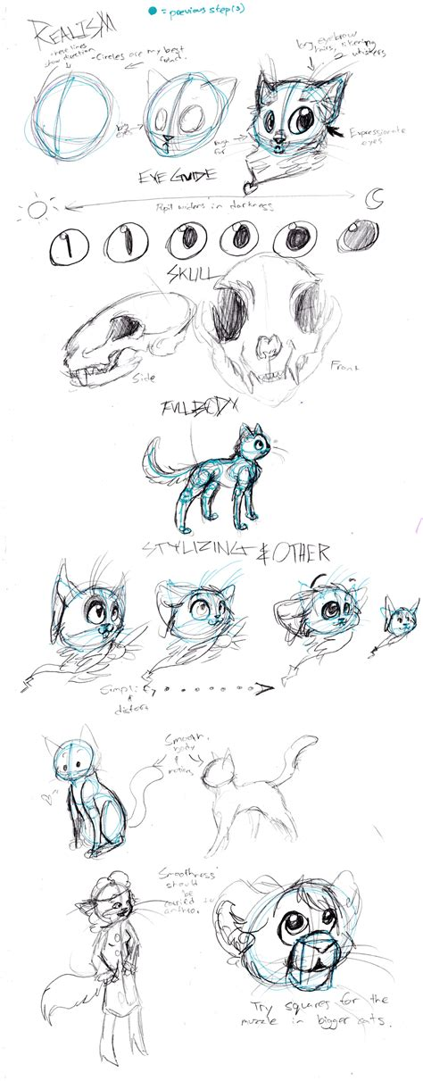 cat tutorial cat anatomy drawing tutorial www imgkid the image