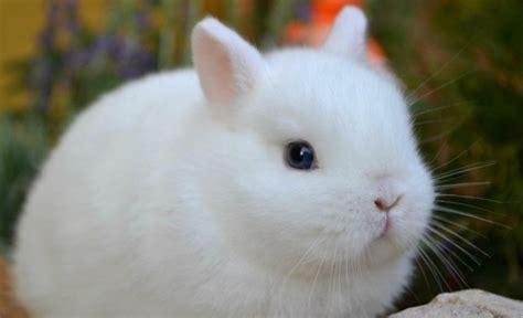 gabbie per coniglietti nani fisiologia ed etologia la stalla dei conigli allevamento