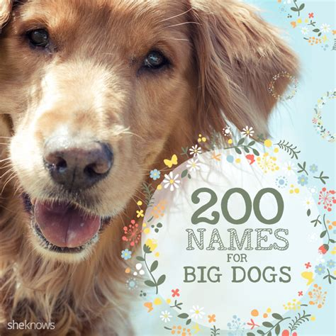 large names 200 names for big dogs that big