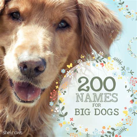names for big dogs 200 names for big dogs that big