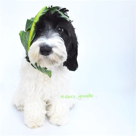 is spinach for dogs 12 fruits and veggies that your pup will go bananas for