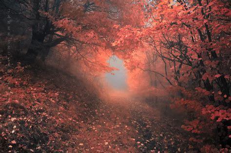 by janek sedlar photography pinterest 1000 images about janek sedlar on pinterest autumn