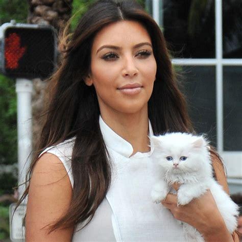 pet cat with pet cats popsugar entertainment