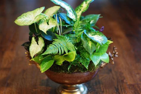 indoor plant arrangements back to organic breathe a little easier common house