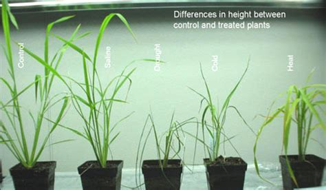 Does The Color Of Light Affect Plant Growth by Effect Of Sunlight On Plant Growth F F Info 2017