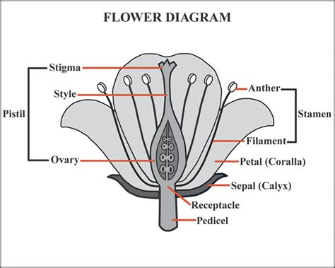 flower part diagram knpc plants