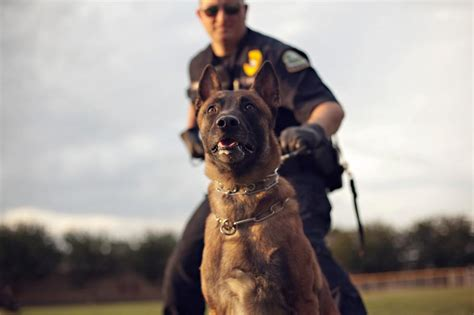 police dogs lives don t matter 12 police dogs died of