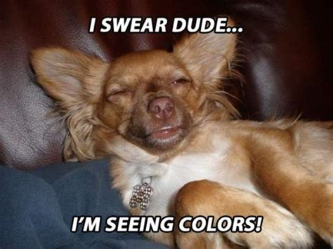 The Dog Meme - stoner dogs 20 hilarious pics of the newest meme based
