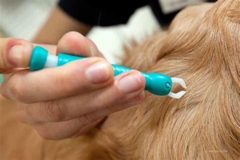 zeckenbiss ab wann gefährlich zecken befall beim hund definition ursachen symptome