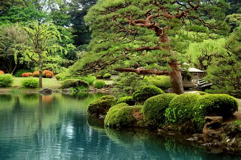 zen and the of murder a black forest investigation i the black forest investigations book 1 books calm zen lake and bonsai trees in tokyo garden