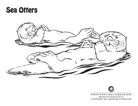 12 best images about sea otters on pinterest cartoon
