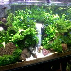 Cacing Aquascape aquascape island on quot ikan guppy memakan flake