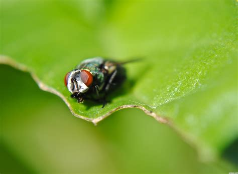 flies in the backyard flies in the backyard flies in backyard 28 images flies 101 25 best ideas