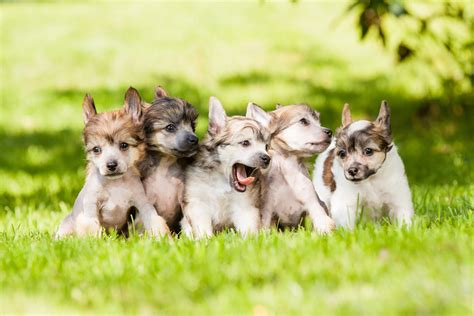 puppies on puppies on the grass wallpapers and images wallpapers pictures photos