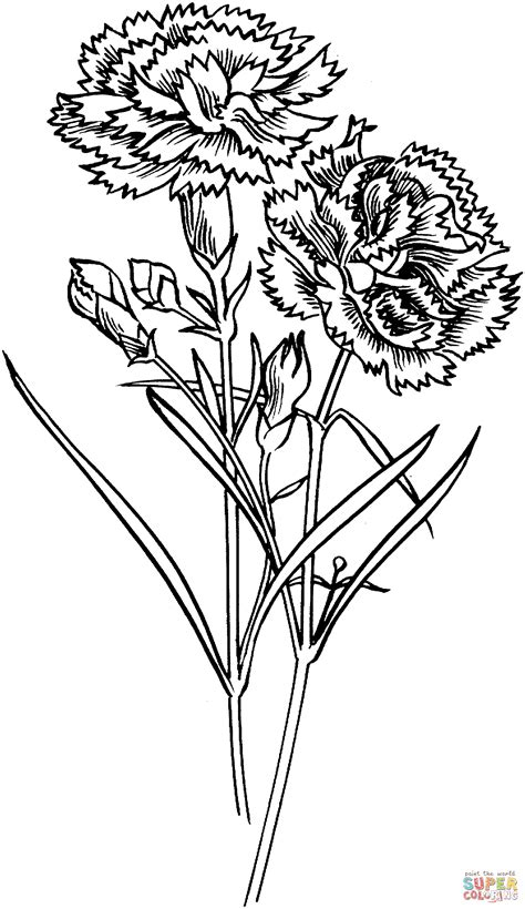 carnation flowers coloring page free printable coloring