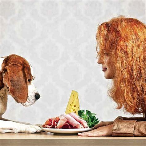 gatti alimentazione casalinga programma software dieta casalinga cani e gatti