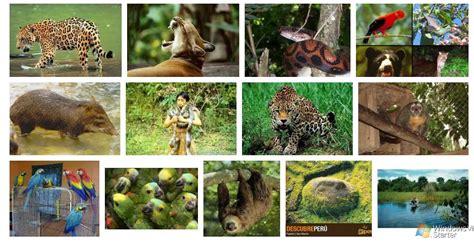 imagenes de animales nativos del peru apoyo educativo primaria imagenes fauna de la costa