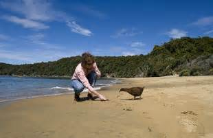 car hire new zealand island stewart island experience nz ferry service cruises and