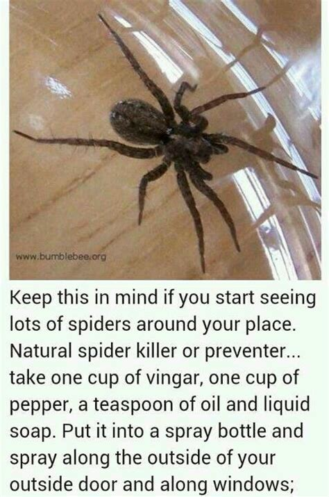 Keep Spiders Out Of Shed by 1000 Ideas About Ant Killer Recipe On