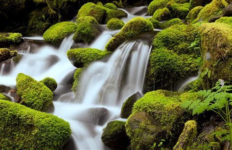 calming green calm green waterfall wallpaper wall mural