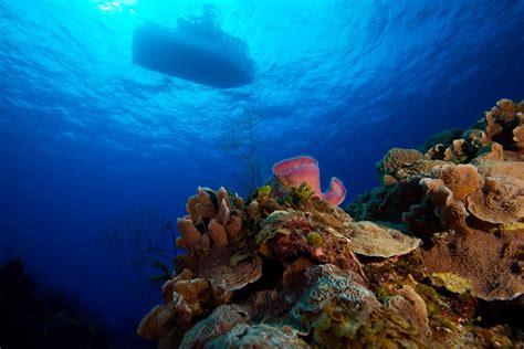 dive cozumel cozumel two tank scuba diving cozumel cruise excursions
