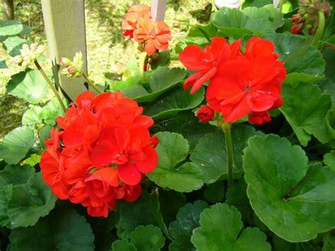 giardini con fiori fiori in giardino