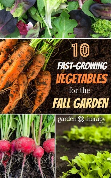 1000 ideas about fall planting guide on pinterest zone