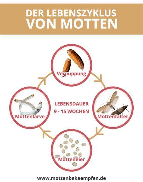 Motten Im Bett by ᐅ Motten Bek 228 Mpfen In 3 Einfachen Schritten Effektiv Und