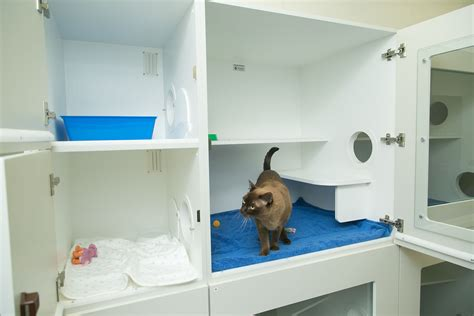 cat and hospital day care cat hotel perth cat hospital cat boarding