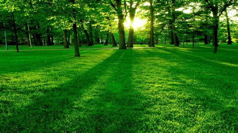 Beautiful Green Green Park Landscape Hd Wallpapers For All Green Landscaping