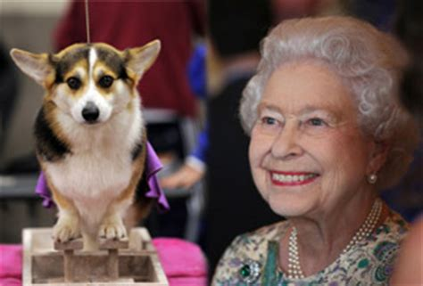 elizabeth s dogs pours dogs gravy says book on royal for animals astro awani