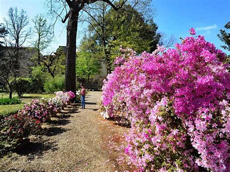il giardini dei semplici riapre il giardino dei semplici firenze notizie