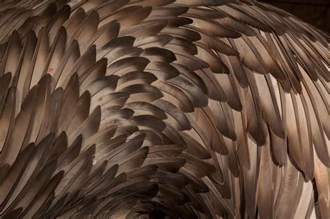 how to make layers feather kate mccgwire layers feather sculptures at st mary in the