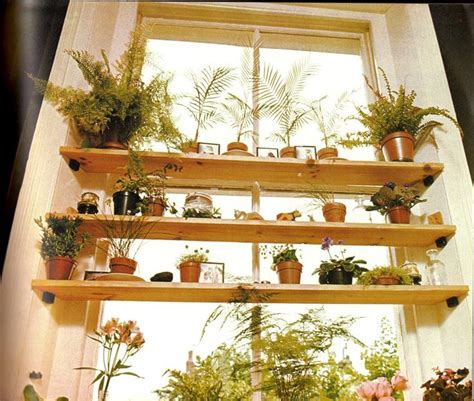 indoor window garden 63 best house plant display images on pinterest indoor