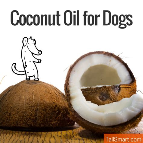 coconut for dogs coconut for dogs tailsmart