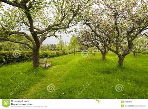 dans le jardin de banc dans le jardin de verger photo stock image 31607170