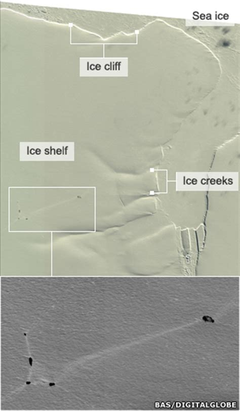 Shackleton Shelf by Emperor Penguins Beat Cliffs To Breed News