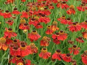 Garden Perennial Flowers Perennial Flowers Plants Hgtv
